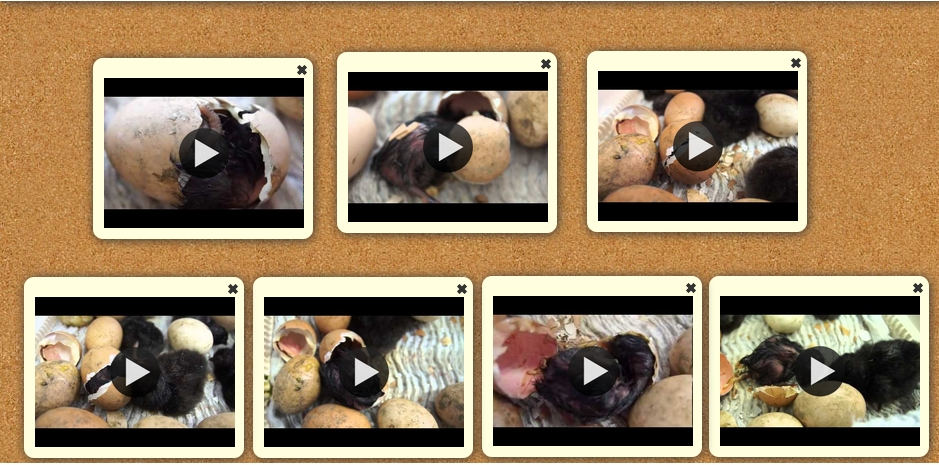 poussin lancement videos