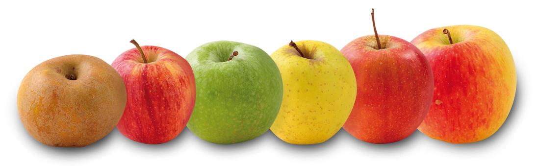 variete pommes