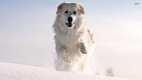 mon, chien enzo