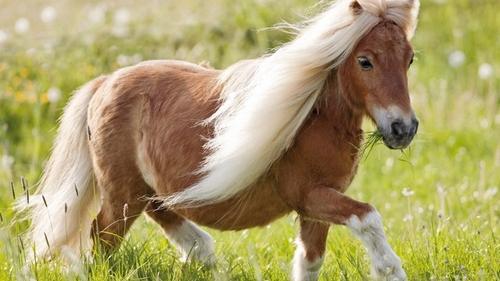 poney lea gs