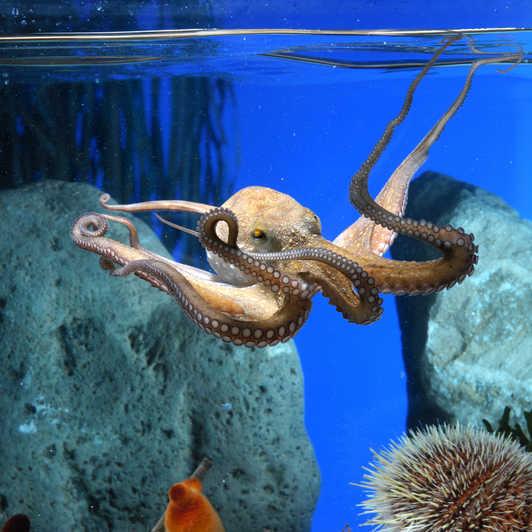 aquarium hugo