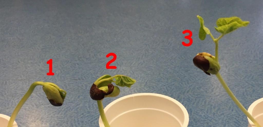 plantes 010221