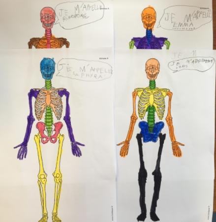 Bulles squelettes
