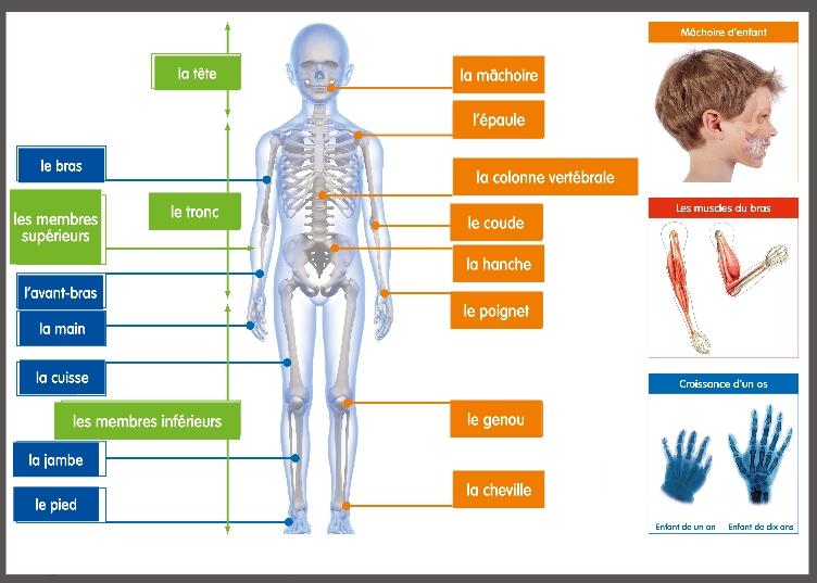 bilan corps humain