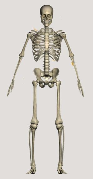 squelette 01