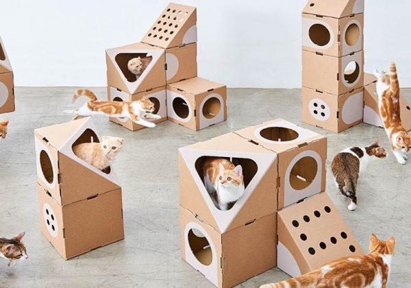 la maison du nouveau chat calvin