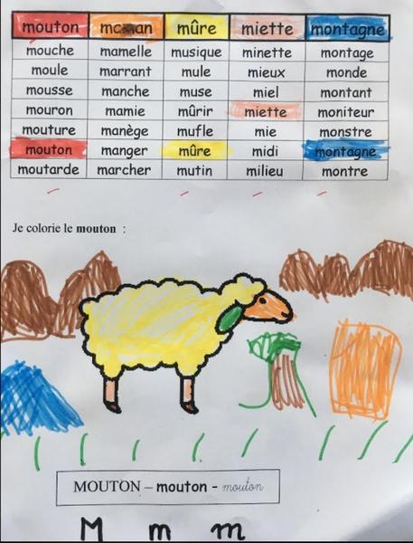 GS mouton discir
